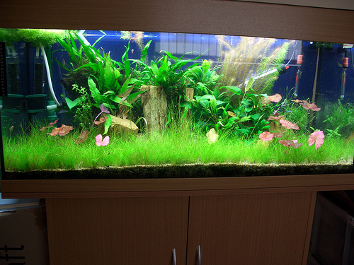why is my fish tank cloudy aquariumpros inc minnesota