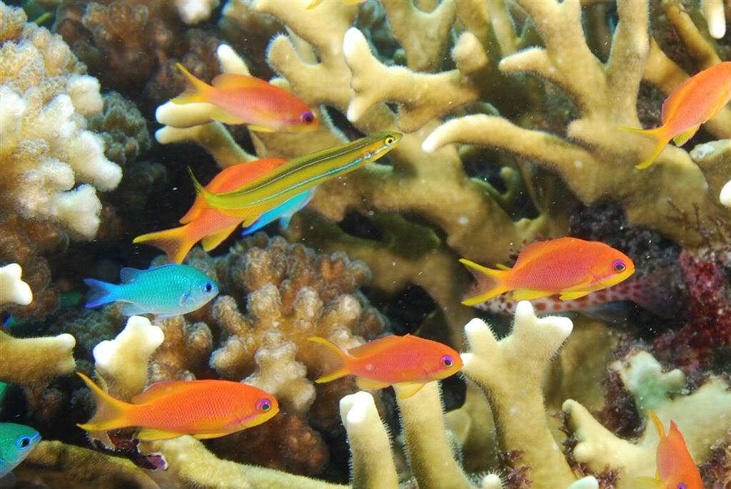 Aquariumpros Inc Minnesota Aquarium Maintenance