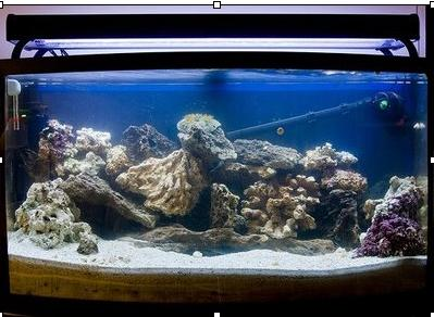 Setting up your saltwater aquarium aquariumpros inc for Ammonia in fish tank