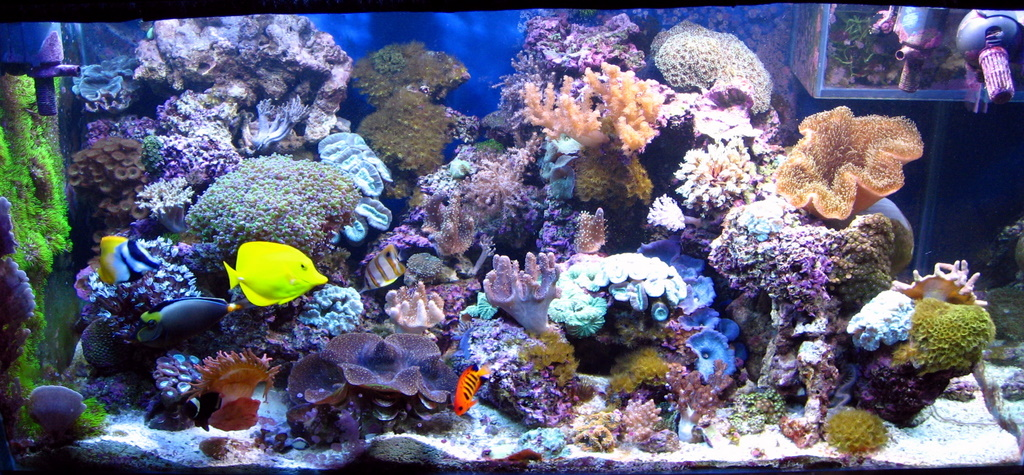Will Algae Be A Problem In My Saltwater Reef Aquarium
