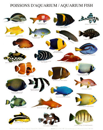 Information on Tropical Fish at Animal-World has freshwater fish of all types with fish pictures and detailed fish information on each fish species, fish tanks and