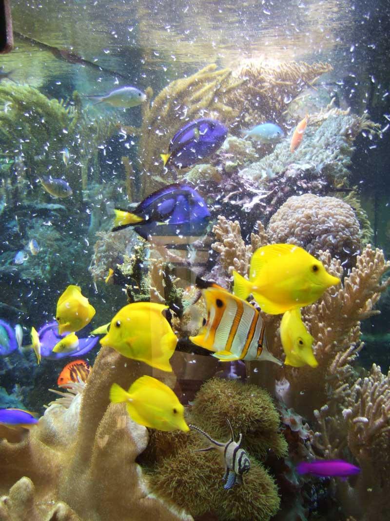 Freshwater fish nutrition - Aquarium Fish Nutrition Most