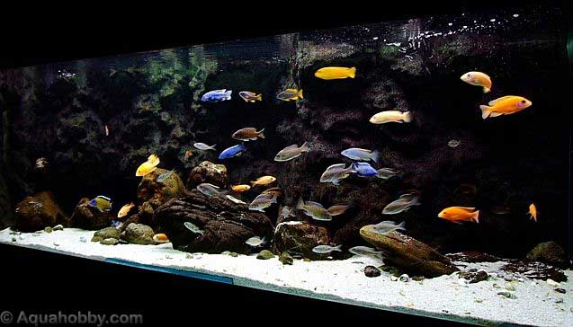 Aquarium Setup Guide. pH-hardness-temperature-salt-aquascaping