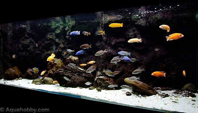 Cichlid Aquarium Design Images & Pictures - Becuo