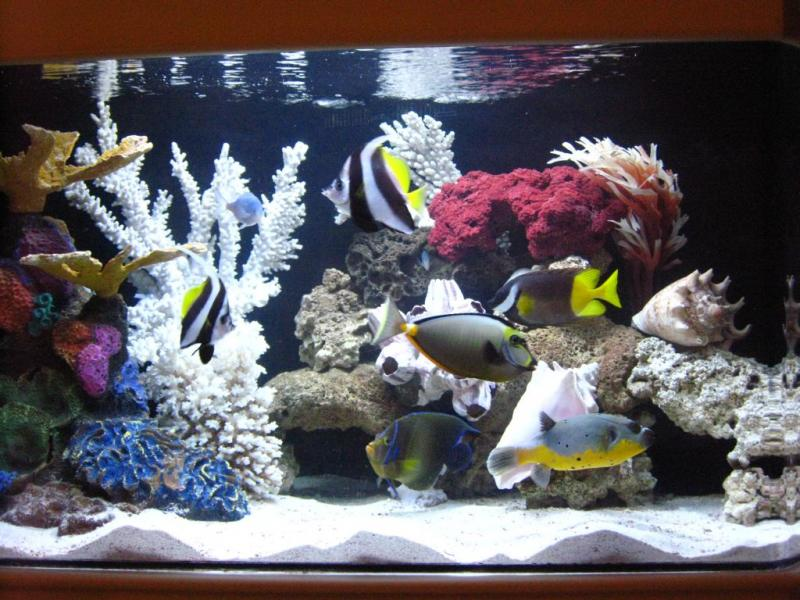 Fish aquariumpros inc minnesota for Fish only saltwater tank