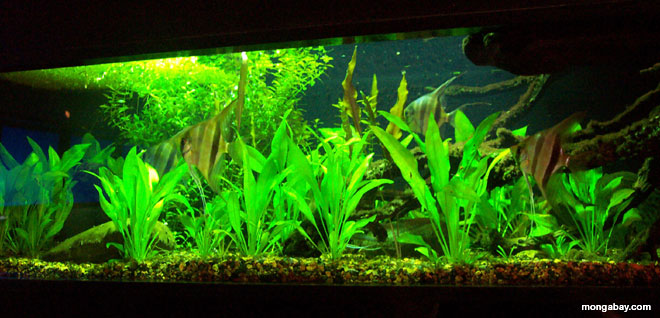 Aquarium Setup Guide Ph Hardness Temperature Salt Aquascaping Aquariumpros Inc Minnesota