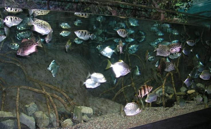 Saltwater aquariumpros inc minnesota for Brackish water fish