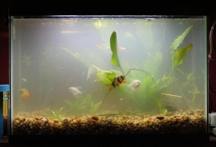Aquarium aquariumpros inc minnesota for Why is my fish tank cloudy